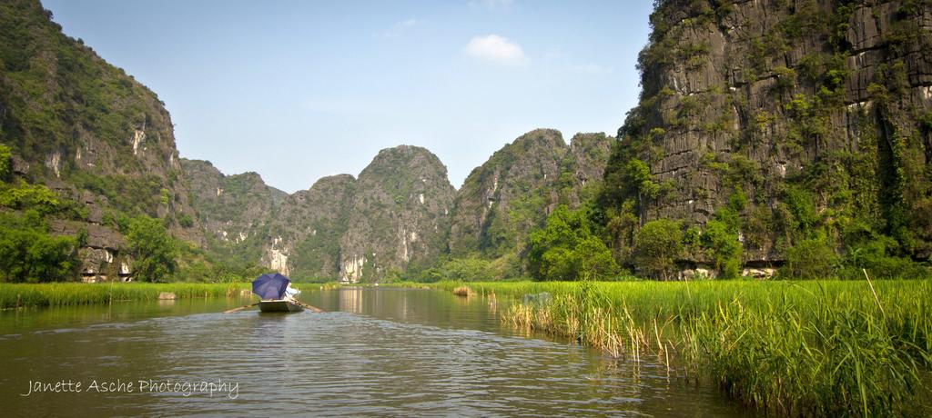 Dòng Sông Ngô Đồng