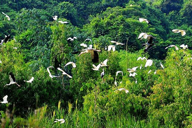 Khu du lịch Vườn Chim Thung Nham